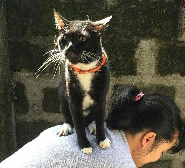 Кажется, этот кот осознал тщетность бытия домашний питомец, животные, кошка, милота, собака, эмоции