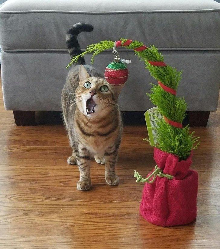 Кот явно ошарашен красотой этого ёлочного шарика домашний питомец, животные, кошка, милота, собака, эмоции