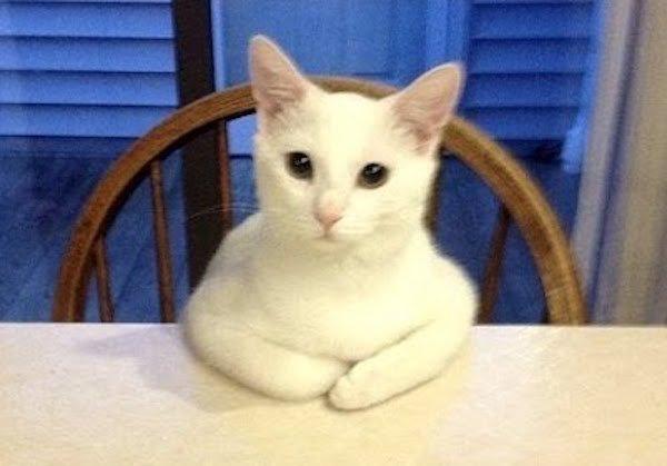Котят по осени считают  бесэдер, карикатуры, мировые новости, новости, рисунки, юмор