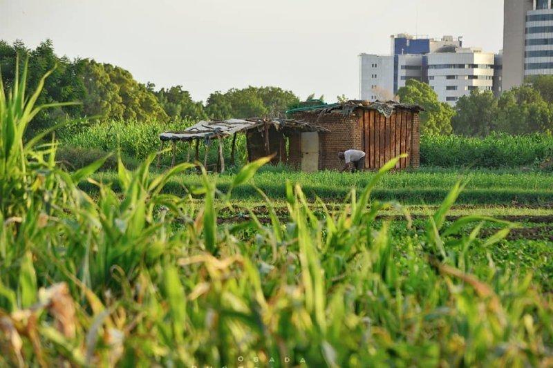 Типичный домик на окраине города агломерация, африка, северная африка, столица Судана, столицы мира, судан, хартум