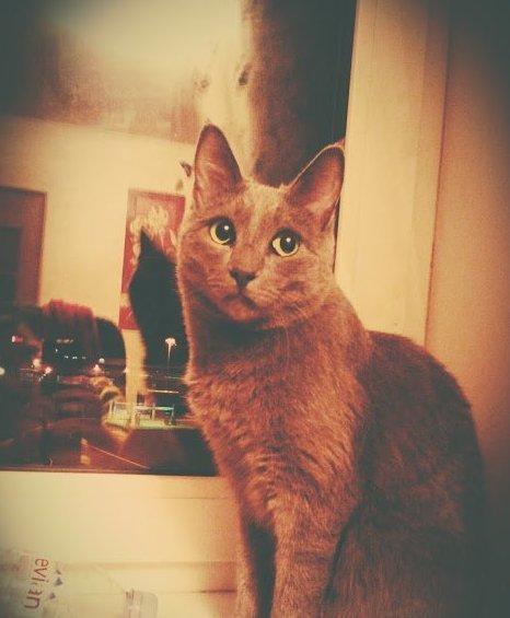 Знакомьтесь, Люциферушка! интересное, коты, кошки, праздник, фото, хвастаемся