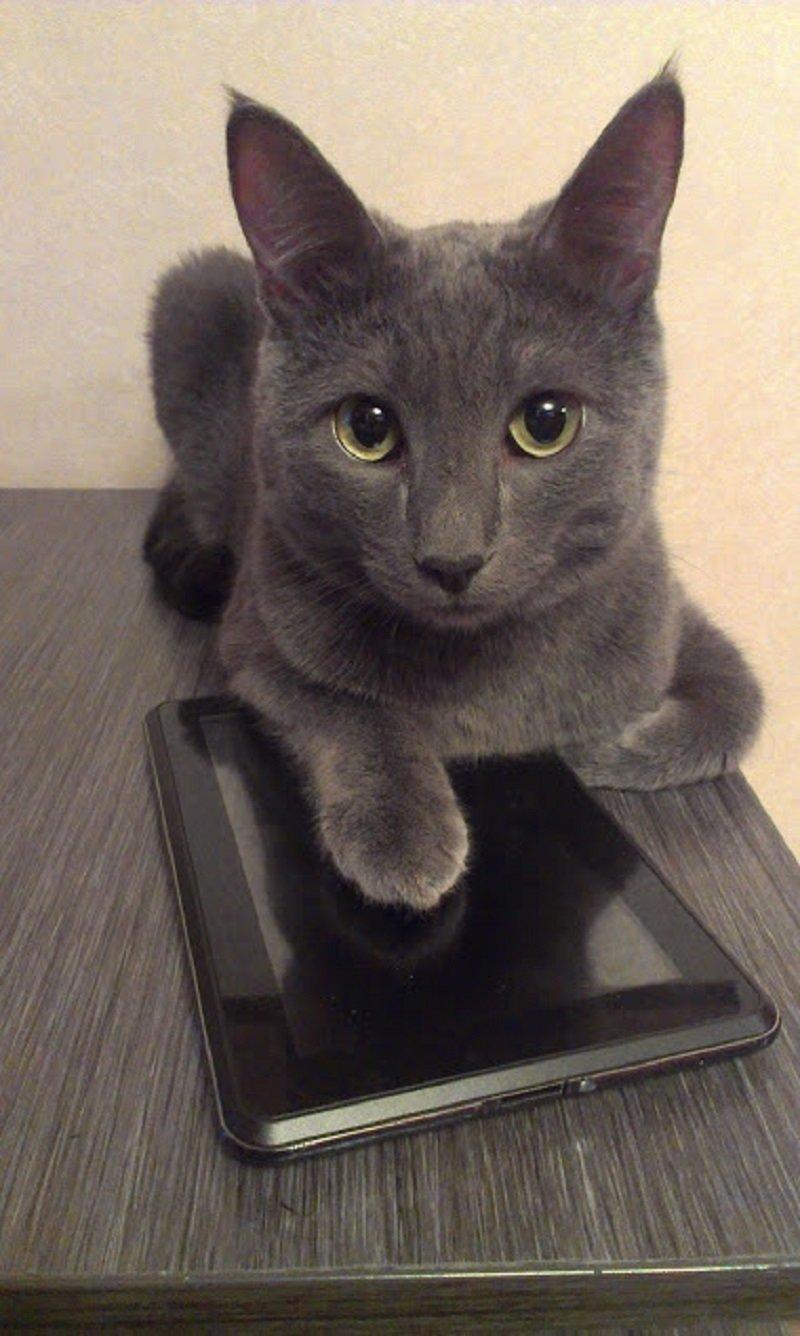 А вы знали? 8 августа - всемирный день кошек! интересное, коты, кошки, праздник, фото, хвастаемся