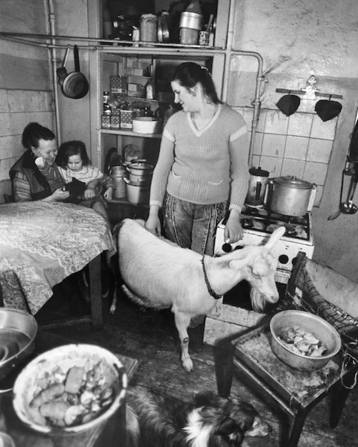 Коза в коммунальной квартире, Москва, 1992 год Судьбы, интересное, история, квартиры, коммуналки, фотомир