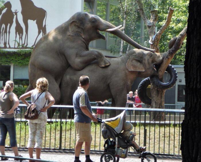 13. После этого похода в зоопарк пришлось рассказывать ребенку то, чего не планировал... животные и люди, зоопарк, поход в зоопарк, смешно, сходил я как-то раз в зоопарк, фото