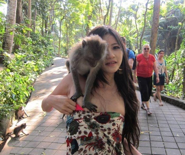 4. Обезьянка попыталась раздеть девушку животные и люди, зоопарк, поход в зоопарк, смешно, сходил я как-то раз в зоопарк, фото