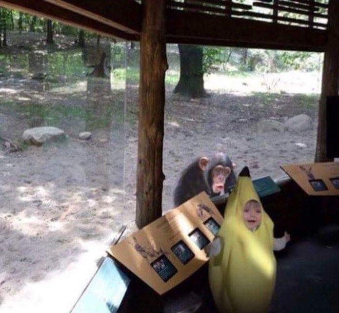 8. Если вдруг ваш ребенок захочет пойти в зоопарк в костюме банана животные и люди, зоопарк, поход в зоопарк, смешно, сходил я как-то раз в зоопарк, фото