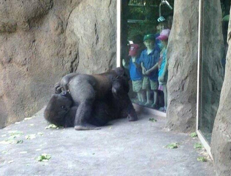 21. Бесстыдники! животные и люди, зоопарк, поход в зоопарк, смешно, сходил я как-то раз в зоопарк, фото