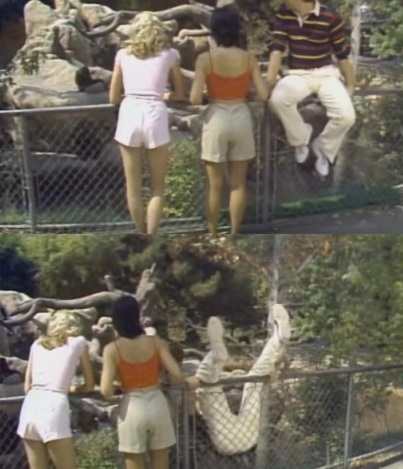 17. Таблички никого не останавливают животные и люди, зоопарк, поход в зоопарк, смешно, сходил я как-то раз в зоопарк, фото