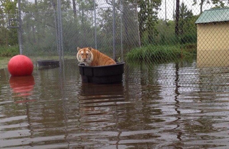 19. После наводнения в зоопарке животные и люди, зоопарк, поход в зоопарк, смешно, сходил я как-то раз в зоопарк, фото