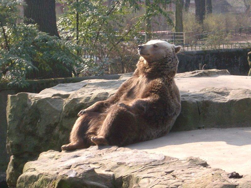 18. Пришел посмотреть на животных, в итоге они смотрят на людей животные и люди, зоопарк, поход в зоопарк, смешно, сходил я как-то раз в зоопарк, фото