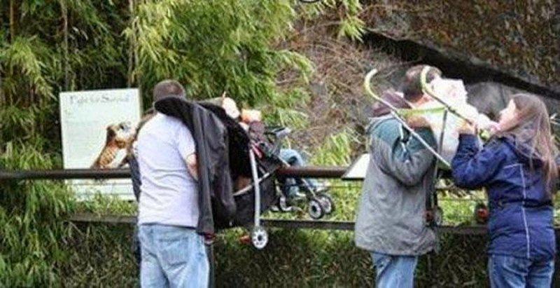 15. Родители постоянно делают эти ужасные вещи в зоопарке животные и люди, зоопарк, поход в зоопарк, смешно, сходил я как-то раз в зоопарк, фото