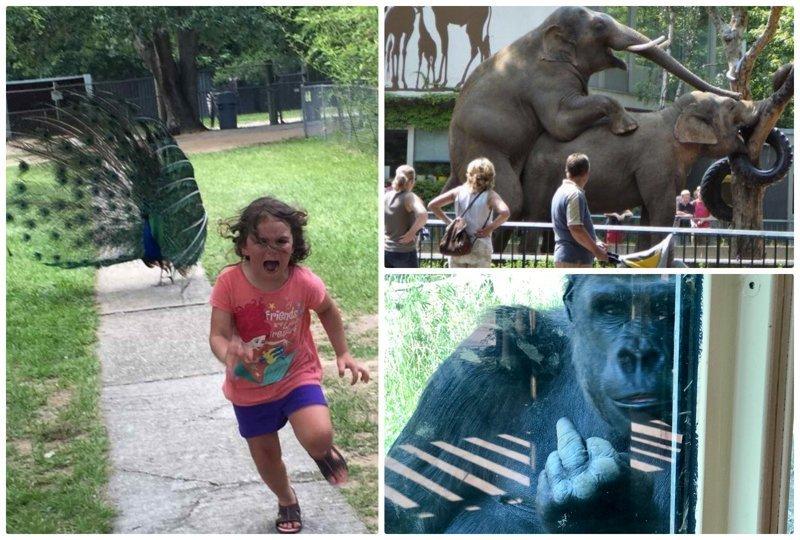20+ уморительных примеров, когда поход в зоопарк обернулся настоящим провалом животные и люди, зоопарк, поход в зоопарк, смешно, сходил я как-то раз в зоопарк, фото