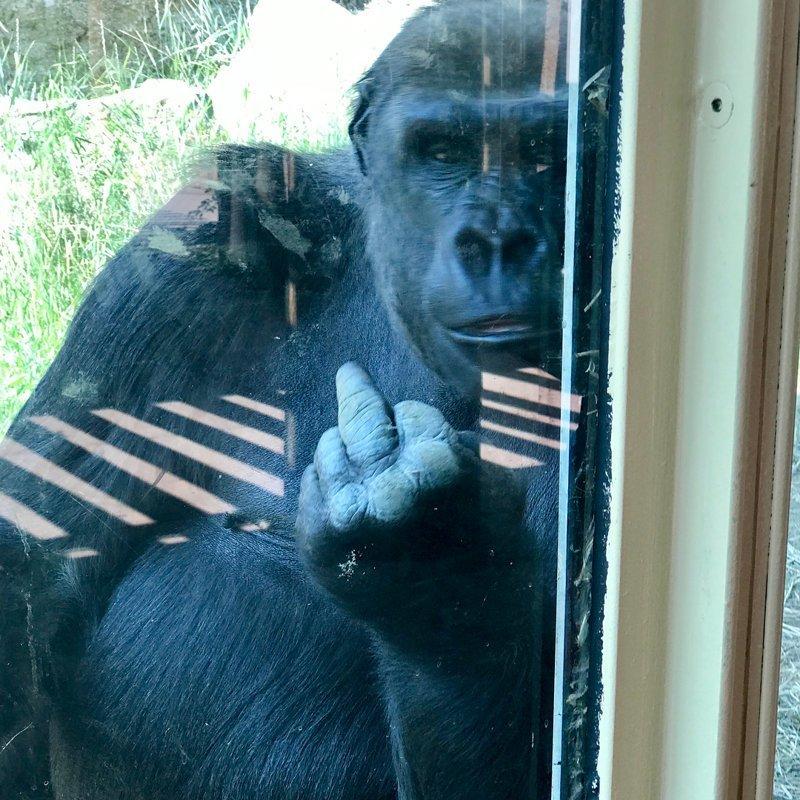 2. Не все вам там рады! животные и люди, зоопарк, поход в зоопарк, смешно, сходил я как-то раз в зоопарк, фото