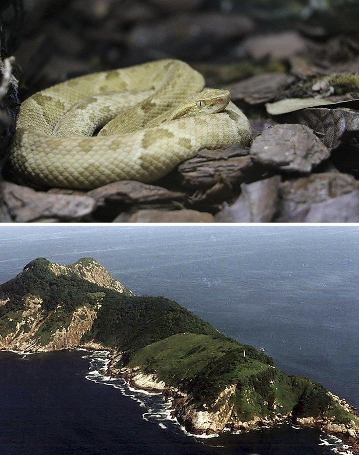 Остров Кеймада-Гранди, Бразилия  запрет, место, мир, посещение, путешествия, тайна, фото
