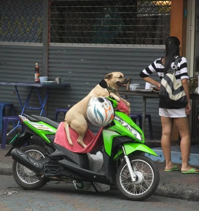 В ожидании хозяйки день, животные, кадр, люди, мир, снимок, фото, фотоподборка