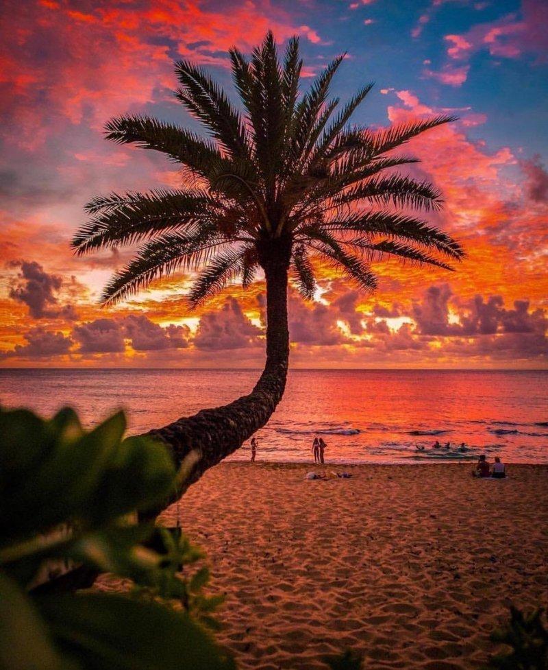 Райский закат день, животные, кадр, люди, мир, снимок, фото, фотоподборка