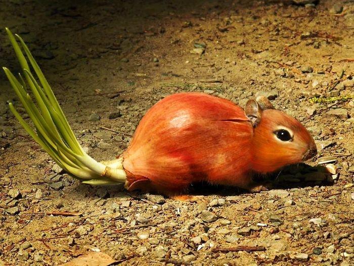 Лучишь животные, забавно, прикол, растения, фотошоп, юмор