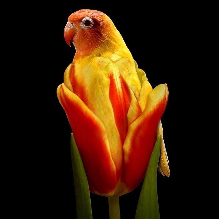 Тюльгай животные, забавно, прикол, растения, фотошоп, юмор