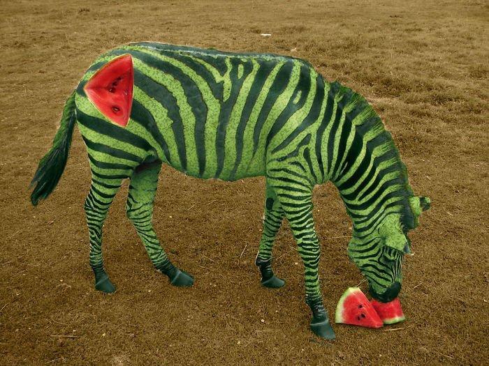 Зебруз животные, забавно, прикол, растения, фотошоп, юмор