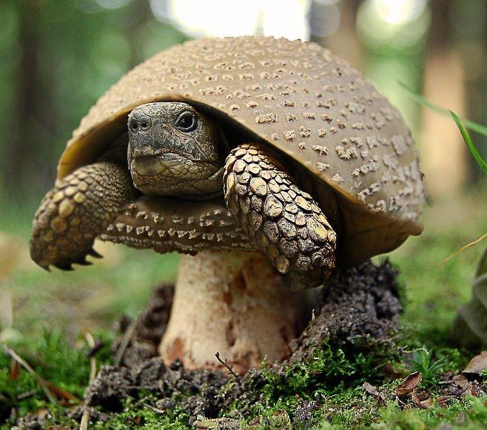 Грибопаха животные, забавно, прикол, растения, фотошоп, юмор