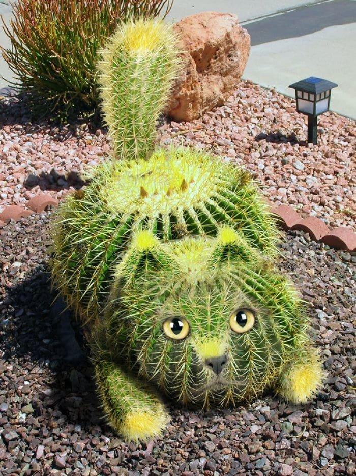 Котитус животные, забавно, прикол, растения, фотошоп, юмор