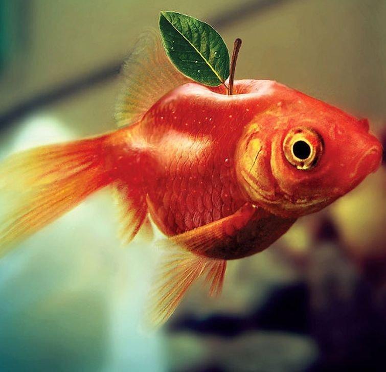 Рыблоко животные, забавно, прикол, растения, фотошоп, юмор