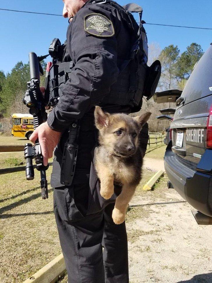 Так вот как выглядит карманная собачка животные, охрана, прикол, собака, юмор
