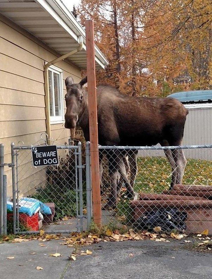 Когда проходишь мимо соседского дома и тут у тебя взрывается мозг животные, охрана, прикол, собака, юмор