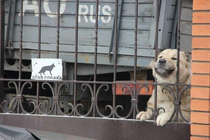 Ну как такого можно бояться? животные, охрана, прикол, собака, юмор