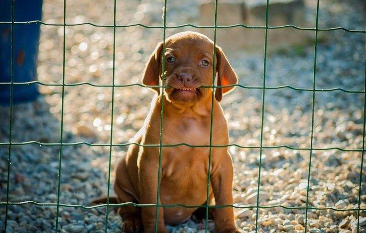 В принципе пугает он неплохо животные, охрана, прикол, собака, юмор