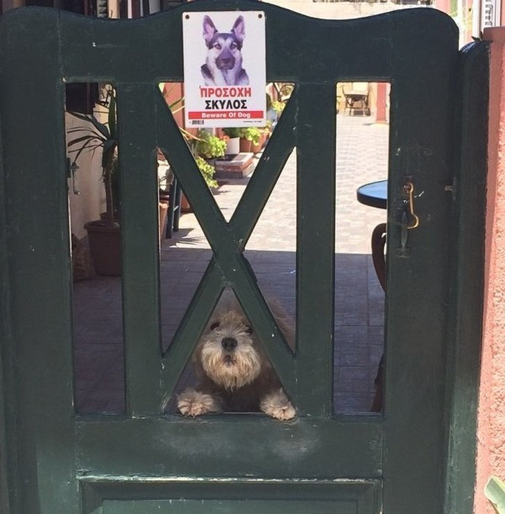 Эта собака из Греции на самом деле очень опасна. Она только прикидывается милой животные, охрана, прикол, собака, юмор