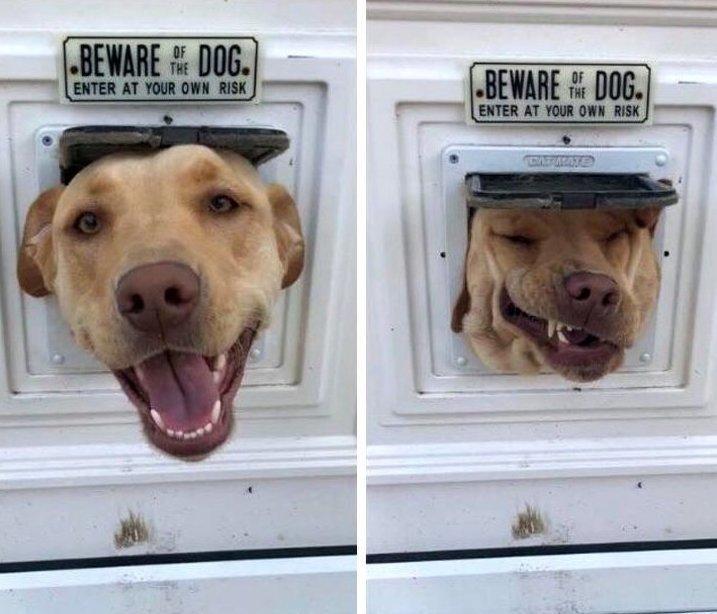 Кажется, миссия этой собаки не охранять, а смешить животные, охрана, прикол, собака, юмор