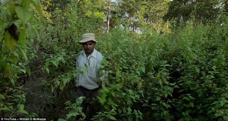 Джадав Пайенг - человек, который за 40 лет превратил пустыню в заповедный лес заповедник, индия, история жизни, круто!, лес, настоящий человек, один в поле воин, цель жизни