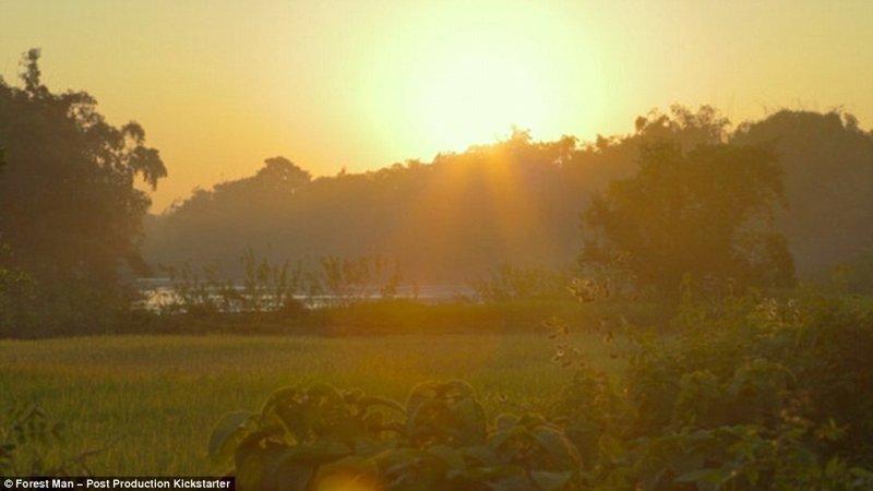 Джадав Пайенг мечтает сделать весь остров зеленым, как прежде заповедник, индия, история жизни, круто!, лес, настоящий человек, один в поле воин, цель жизни