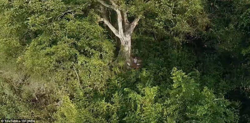 Джадав рядом с первым посаженным им деревом заповедник, индия, история жизни, круто!, лес, настоящий человек, один в поле воин, цель жизни