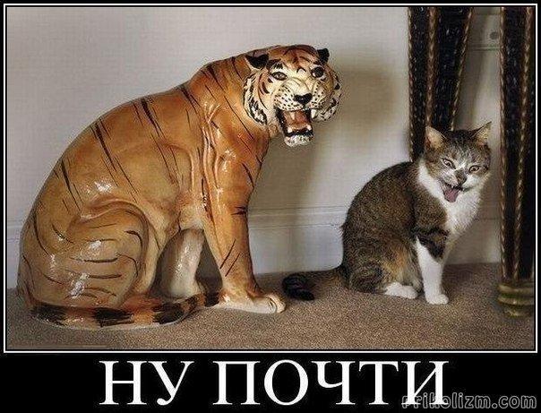 Кошачковый пост для отдыха  животные, коты, кошки, фото, юмор
