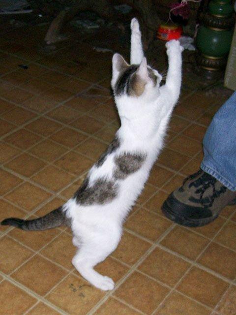 Подборка смешных котов котики, коты, кошечки, подборки приколов, смешные коты