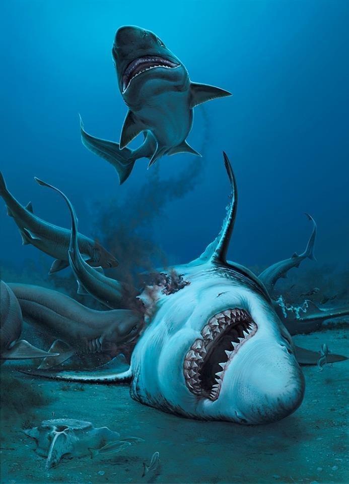 На пляже Австралии нашли зубы акулы, жившей около 25 миллионов лет назад акула, акулы, доисторические животные, морские обитатели, наука, находки, палеонтология, ученые