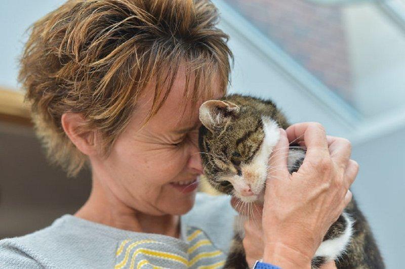 Кошка вернулась к хозяйке 13 лет спустя Счастливый конец, домашние любимцы, животные, кошки, мило, потеряшка, пропала и нашлась, трогательно