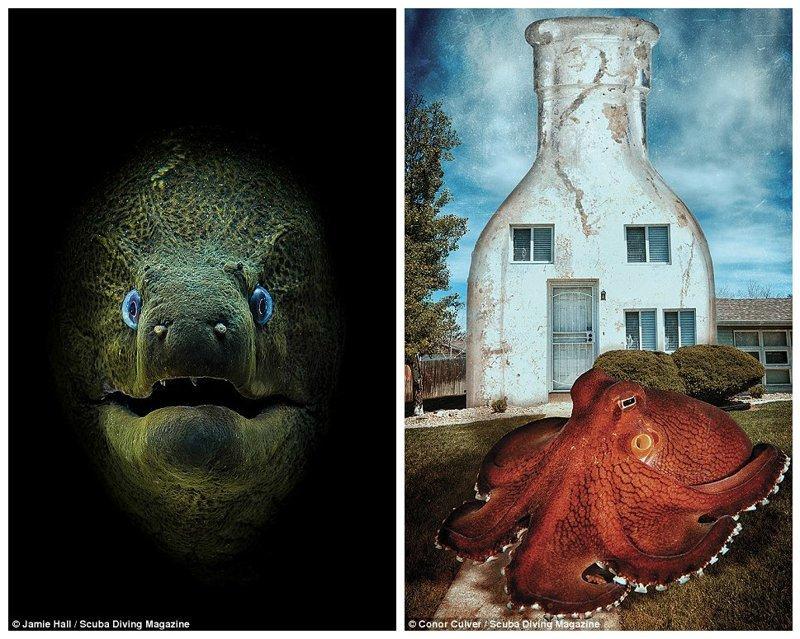"""Мурена, остров Тиран, Красное море (Джейми Холл, 1 место в категории """"компакт-камера""""). Осьминог (Конор Калвер, 1 место в категории """"концептуальное фото"""") Лучшие подводные фотографии года, красота, победители конкурса, подводная фотография, подводное фото, подводный мир, фотоконкурс, фотоконкурсы. природа"""