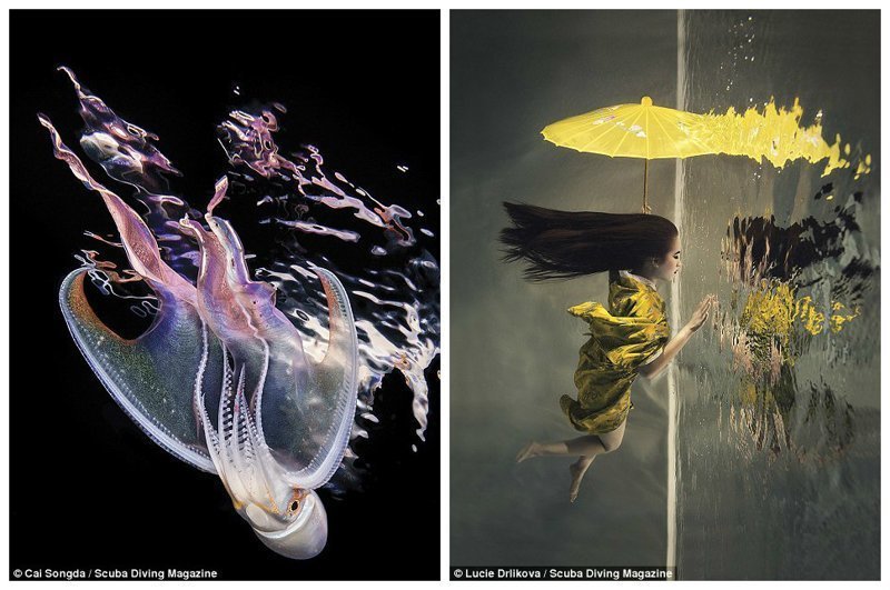 """Тремоктопус, Филиппины (Кай Сонгда, 1 место в категории """"макро""""). Женщина в бассейне, Прага (Люси Дрликова, эффект зеркала достигнут путем поворота изображения на 90 градусов) Лучшие подводные фотографии года, красота, победители конкурса, подводная фотография, подводное фото, подводный мир, фотоконкурс, фотоконкурсы. природа"""