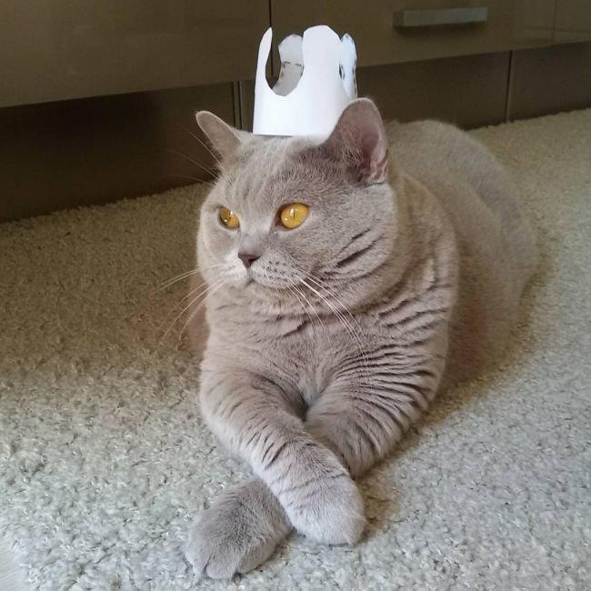 относительно фотки смешных кошек до слез ведь собаки ненароком
