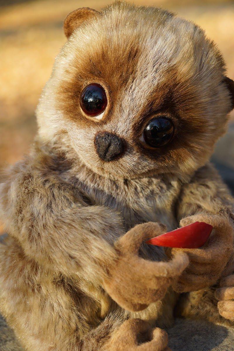 Картинки с самыми милыми животными в мире под призыв