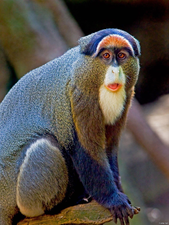 Фото всех обезьян мира