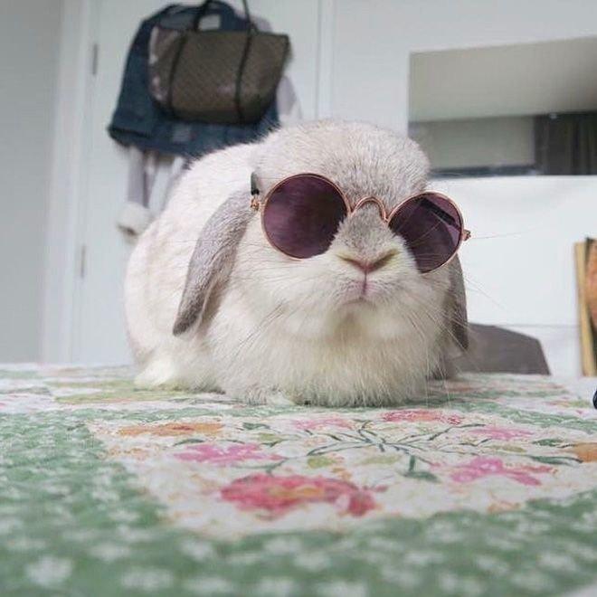Картинка кролика с очками