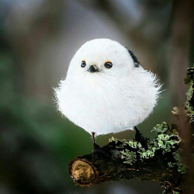 Пестрый мир пернатых животные, пернатые, птицы