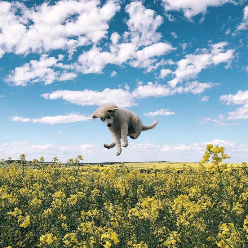 Прыжок день, животные, кадр, люди, мир, снимок, фото, фотоподборка