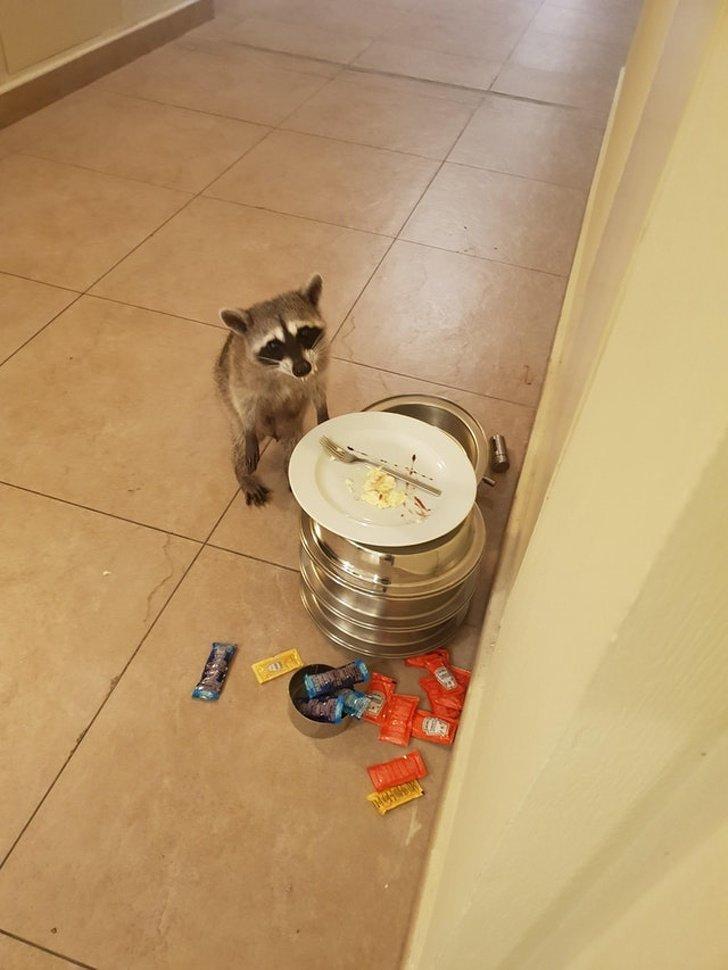 Хотя бы тарелку за собой помыл животные, место преступления, милота, прикол, юмор