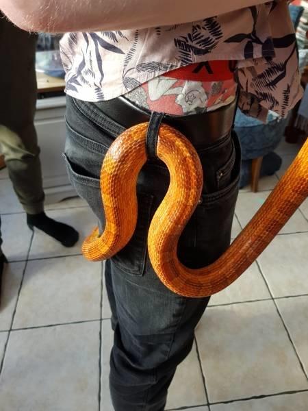 Змея опутала день, животные, кадр, люди, мир, снимок, фото, фотоподборка