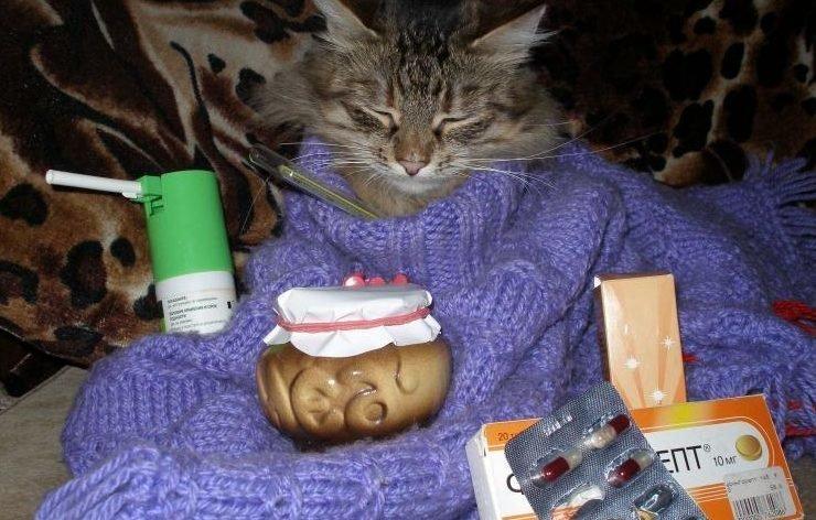 Больной кот смешные картинки